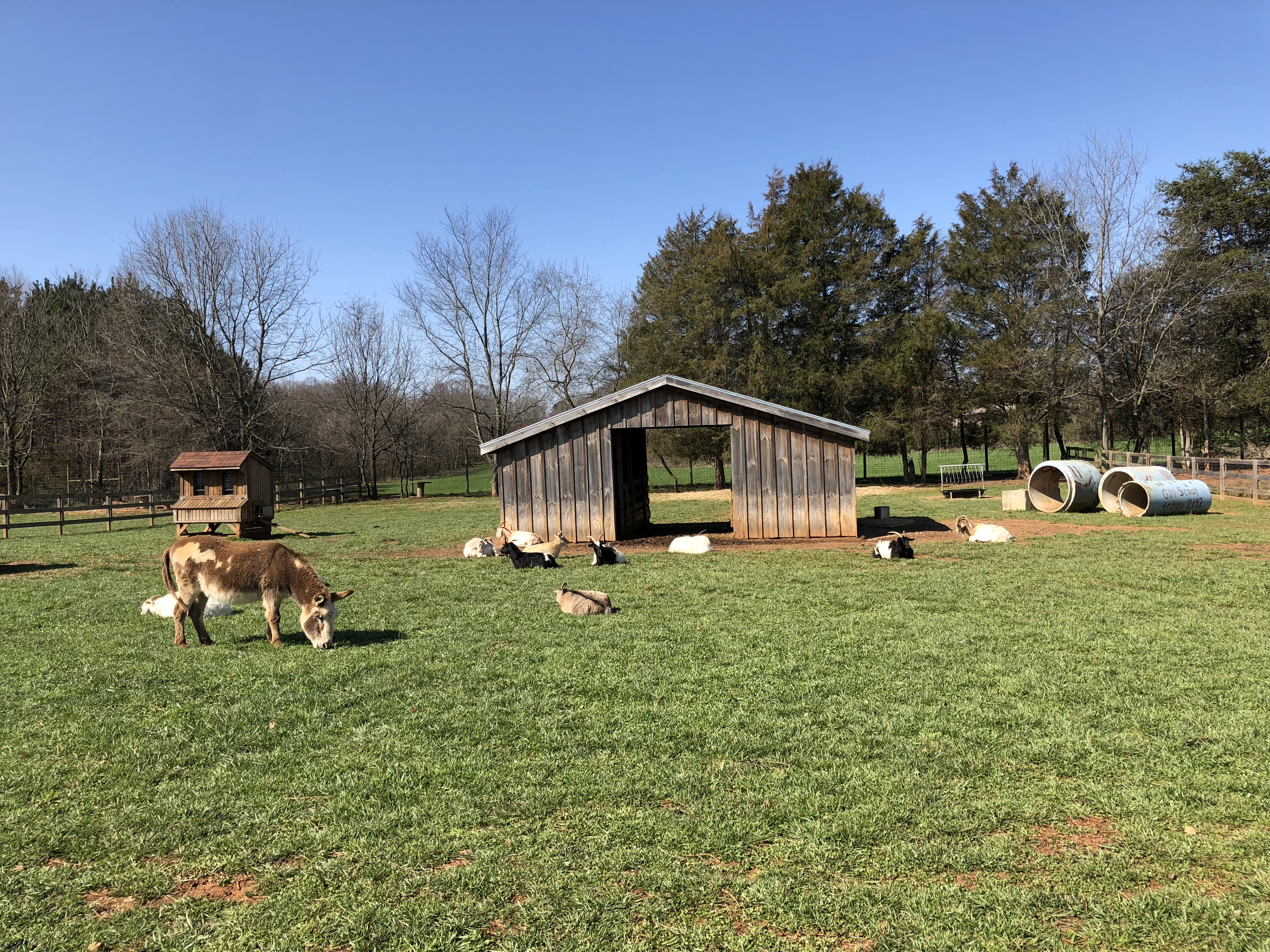 Rescue Ranch:Teaching Compassion for Animals and Responsible Pet Ownership